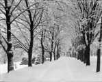 Woodstock College Snow Storm Mar. 7, 1914 Main Driveway (Looking towards House)
